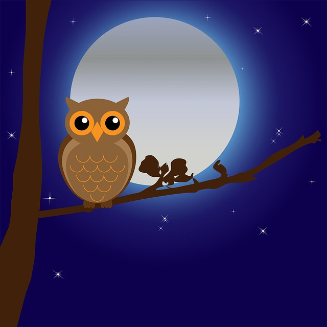 owl-163574_640